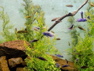Die optimale Aquariumbeleuchtung