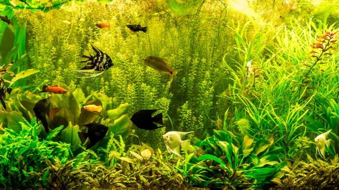 Fische fühlen sich wohl mit dem richtigen Aquariumfilter