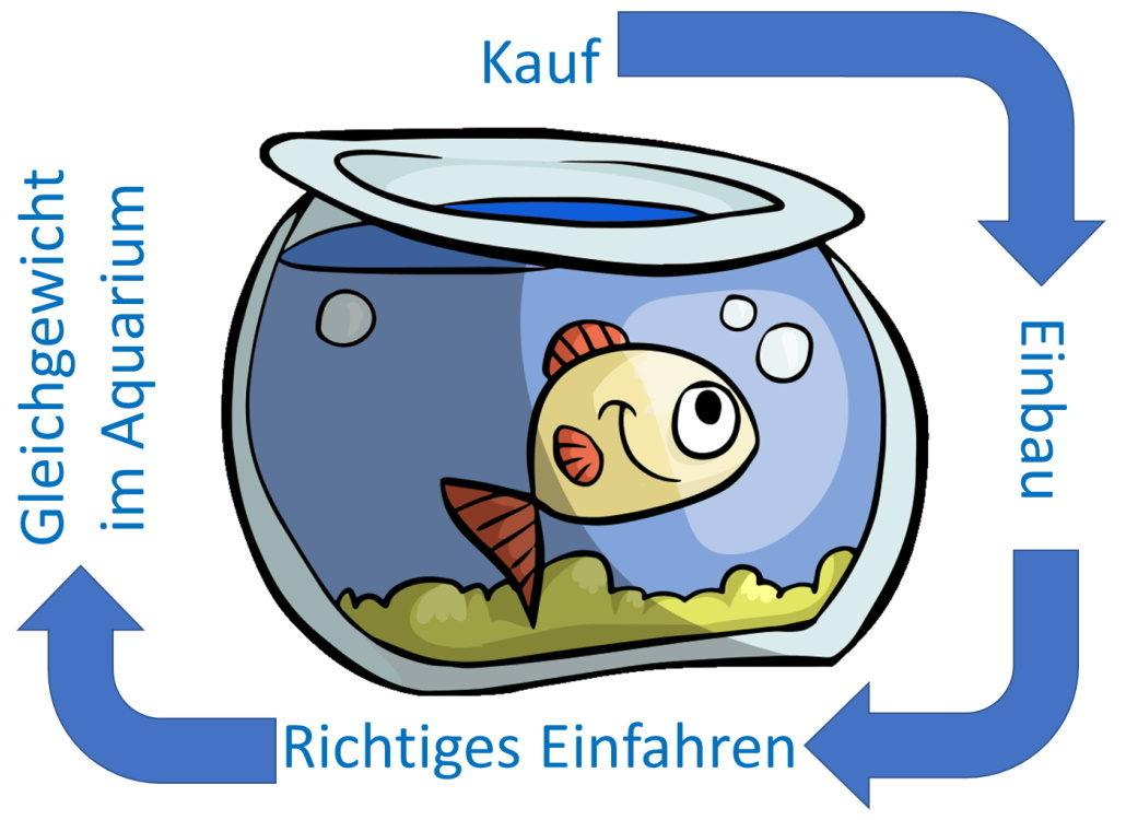 aquarium-filter-richtig-einfahren