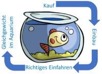 Aquarium Filter einfahren