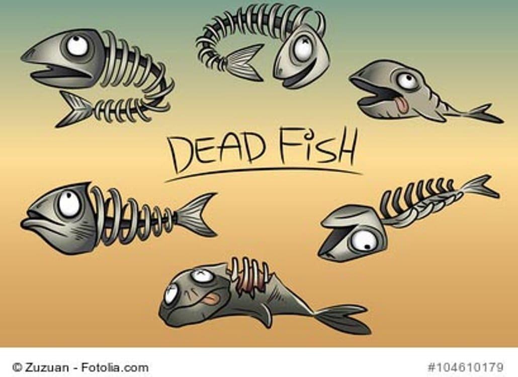 aquariumfilter-ausgefallen
