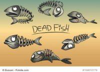 Aquarium Filter ausgefallen