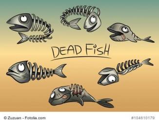 Aquariumfilter ausgefallen