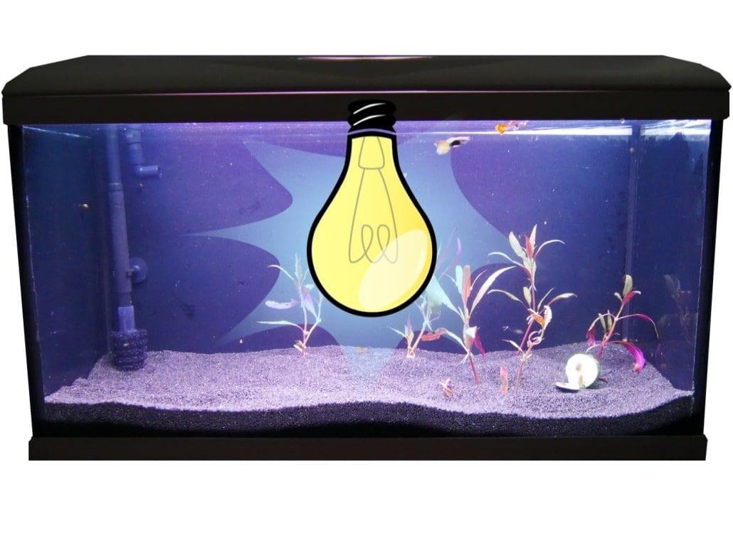 beleuchtung-aquarium
