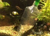 Mulmsauger im Nano Aquarium