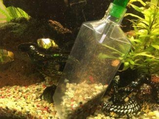 mulmsauger-aquarium