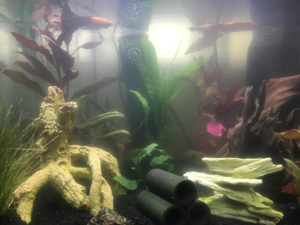 milchiges wasser im aquarium was ist der grund. Black Bedroom Furniture Sets. Home Design Ideas