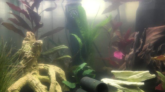 Milchiges Wasser im Aquarium