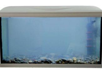milchiges-aquariumwasser