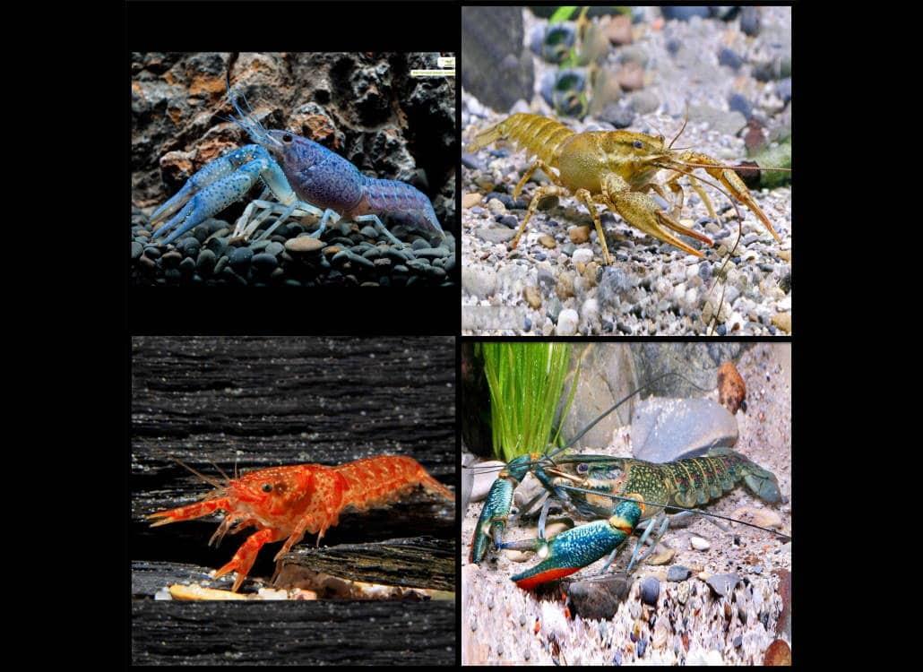 vorstellung_krebse_aquarium