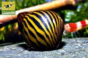 vergesellschaftung_zebra